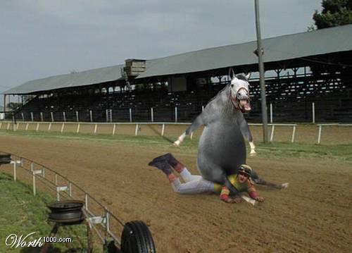 cheval A8.JPG